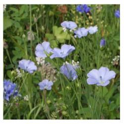 Semence Nectar AJC Nature