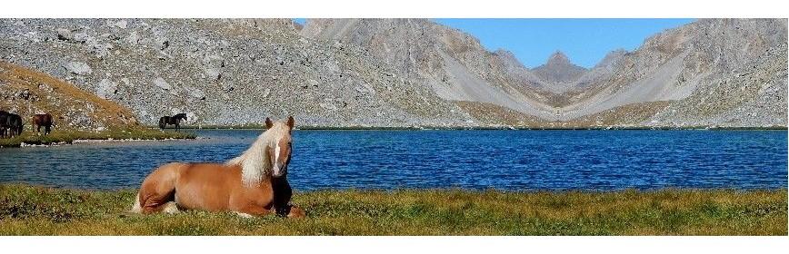 Plantes médicinales pour l'élevage du cheval | AJC Nature
