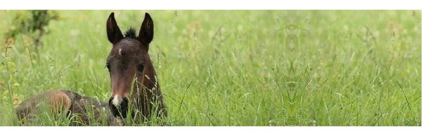 Plantes médicinales spéciales Poulain et élevage | AJC Nature