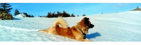 Gamme complète pour chiens âgés | AJC Nature