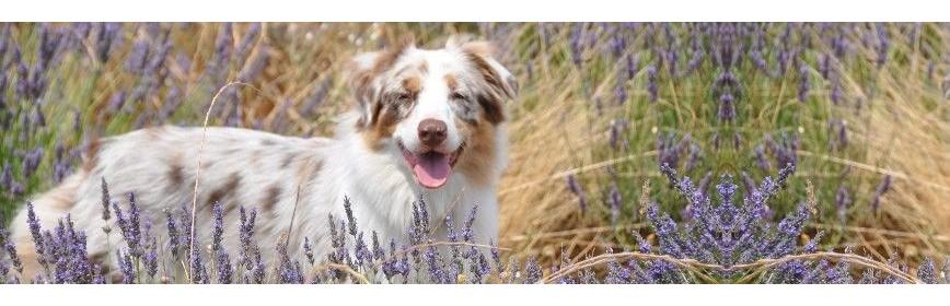 Gamme complète pour aider votre chienne gestante  AJC Nature
