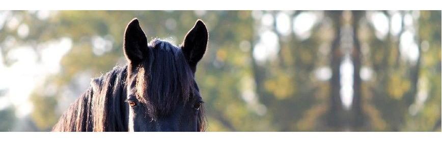 Lotions d'hygiène pour les yeux et les oreilles du cheval | AJC Nature