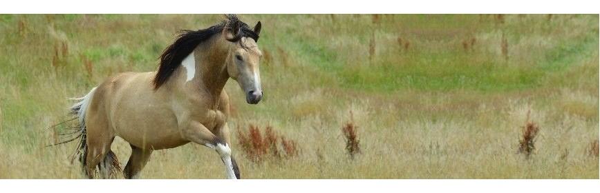 Choisir la bonne alimentation du cheval sous Cushing | AJC Nature