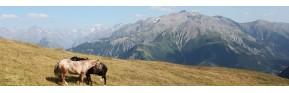 Cushing du cheval, action dopaminergique | AJC Nature