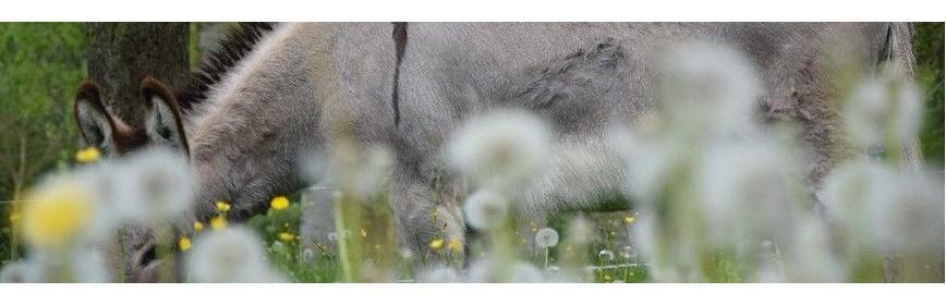 Feed back négatif pour un cheval atteint d'un cushing | AJC Nature