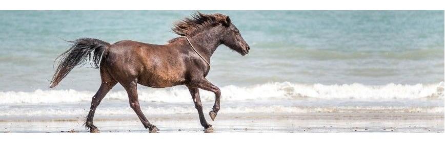 Drainage et détox du cheval en cas de Cushing | AJC Nature