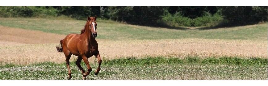 Pack Cushing pour le cheval (plantes médicinales) | AJC Nature