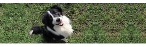 Analyse de poils de votre chien | AJC Nature