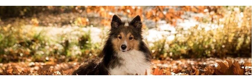 Cure d'automne, drainage et vitamines pour le chien | AJC Nature