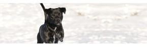 Cure d'hiver, immunité et vitamines pour le chien | AJC Nature