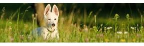 Cure de printemps : insectes, drainage et vitamines pour le chien | AJC Nature