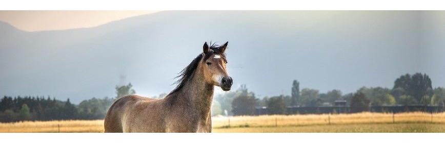 Duo, Pack, Promo et Bonnes affaires pour votre cheval | AJC Nature