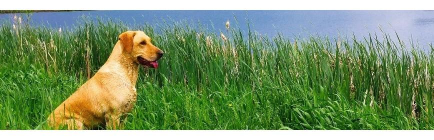 Contre les démangeaisons chez le chien | AJC Nature