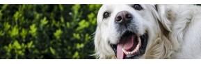 Brosser les dents de son chien | AJC Nature