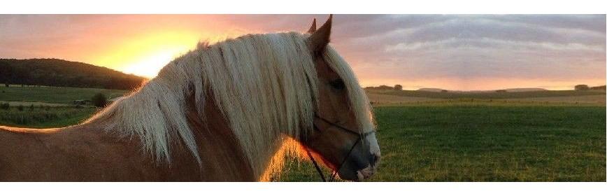 Dossiers sur la santé et les maladies du cheval | AJC Nature