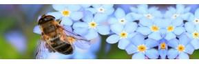 Gélules, thés, tisanes et compléments naturels et BIO | AJC Nature