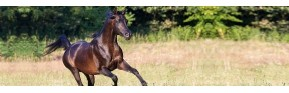 Soins des articulations (arthrose, boiterie,...) du cheval | AJC Nature