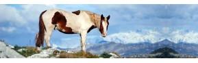 Aide à la respiration du cheval (Toux, Emphysème) | AJC Nature