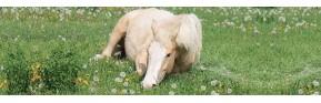 Plantes pour drainer le foie et aider à la digestion du cheval | AJC Nature