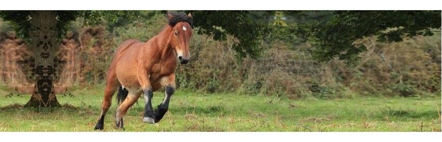 Anti-stress pour le cheval - Action ponctuel ou long terme. | AJC Nature