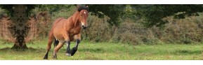 Anti-stress pour le cheval - Action ponctuel ou long terme. | AJC Nature