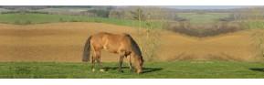 Gamme complète pour traiter la peau du cheval | AJC Nature