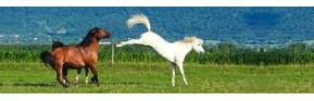 Gamme de vermifuge naturel pour le cheval | AJC Nature
