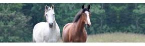 Gamme complète de CMV et minéraux pour le cheval | AJC Nature
