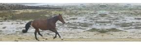 Drainage et hygiène des muscles du cheval | AJC Nature