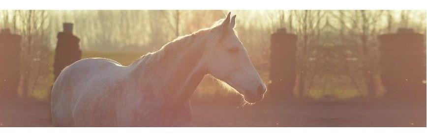 Une sélection de Cures de saison pour le cheval | AJC Nature
