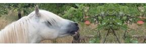 Une sélection exclusive de friandises naturelles pour le cheval | AJC Nature