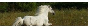Une sélection de plantes médicinales pures pour le cheval | AJC Nature