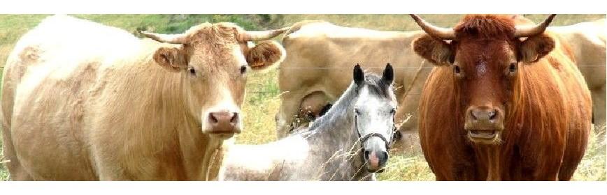 Semences de prairie et plantes sauvages pour chevaux | AJC Nature