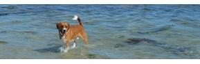 Gamme complète pour traiter la peau du chien | AJC Nature