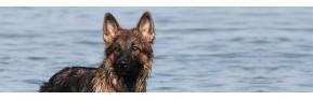 Lotions d'hygiène pour les yeux et les oreilles du chien | AJC Nature
