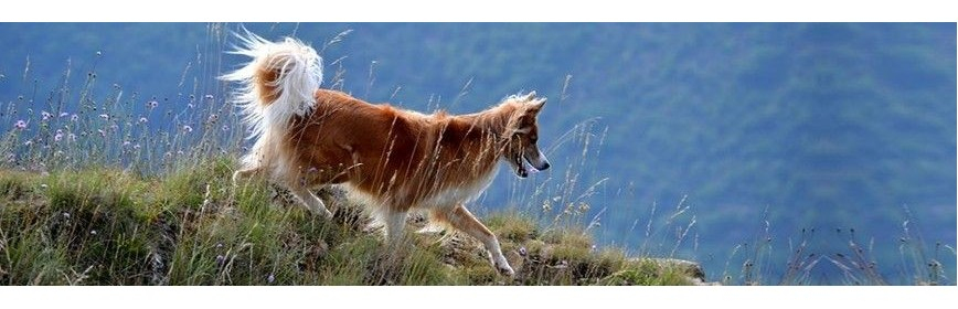 Soins des articulations (arthrose, boiterie,...) du chien | AJC Nature