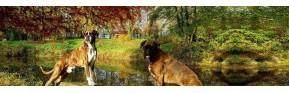 Drainage et aide à la digestion du chien | AJC Nature