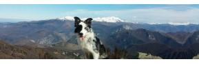 Aide à la respiration du chien (Toux, difficultés,...) | AJC Nature