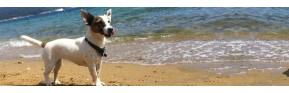 Anti-stress et nervosité pour le chien | AJC Nature