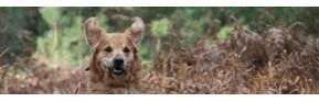 Gamme complète de vitamines et minéraux pour le chien | AJC Nature