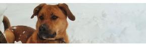 Gamme de vermifuge naturel pour le chien | AJC Nature