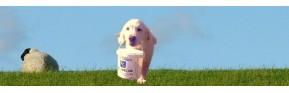 Une sélection de friandises pour le chien | AJC Nature