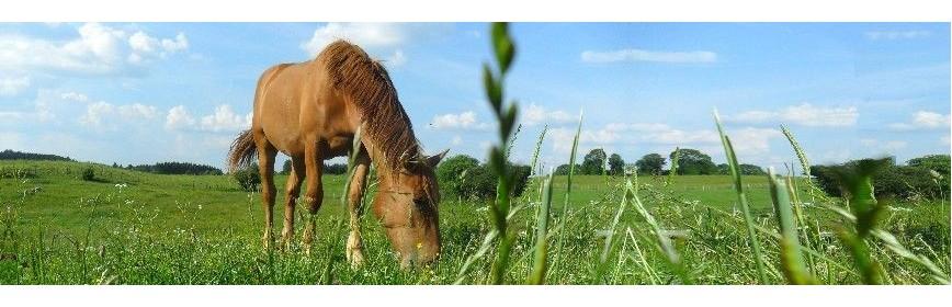 Plantes pour drainage en cas de fourbure chez le cheval | AJC Nature