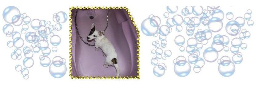 Laver son chien | Bain