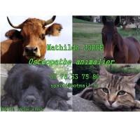 MATHILDE JORGE - OSTEOPATHE ANIMALIER